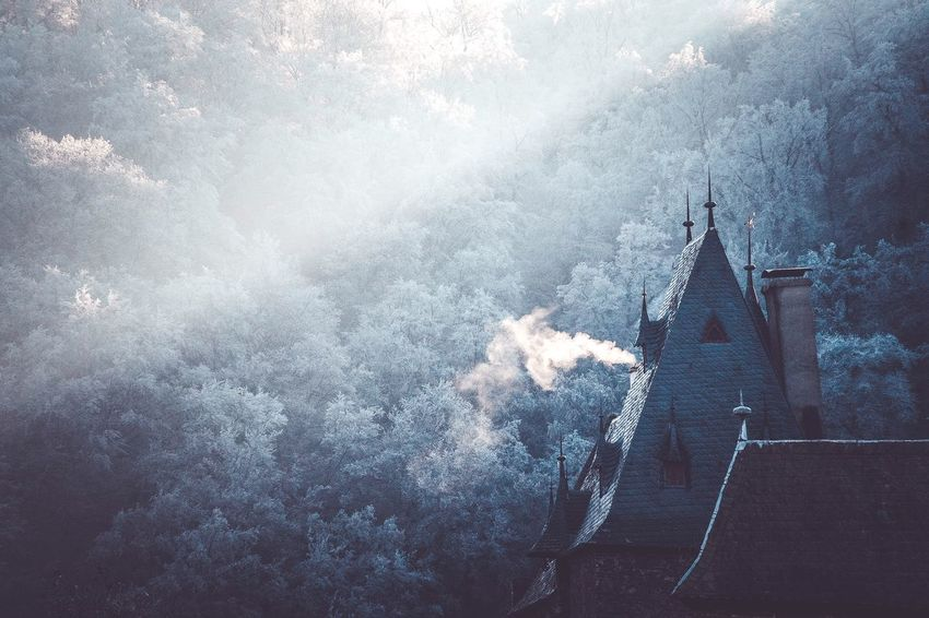 Castle x Morning Light Built Structure Tree Architecture Outdoors Nature The Way Forward Fog Beauty In Nature Farytale Castle