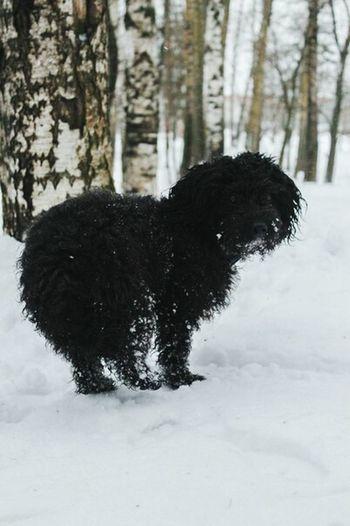 Chapa Dog Love I Love My Pet My Dog <3 Dog