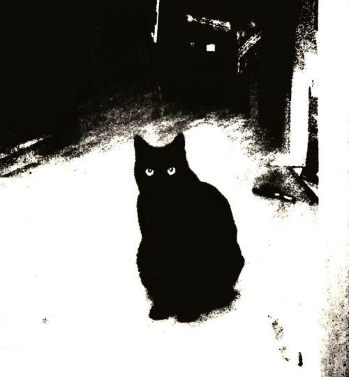 Black And White Blackandwhite monochrome photography Monochrome Mammal Animal Portrait One Animal Sitting Outdoors No People