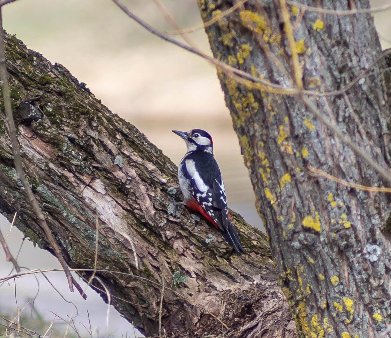 BIRDS PERCHING ON A TREE