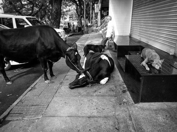 When something is nearby, its worthness won't be if the same thing is far away, the heart can't live without is what needed for every lives that breaths the it a man, dog or all need a simple LOVE. Domestic Animals Animal Themes Mammal Pets Dog Day Full Length Outdoors Cows India Old Man Street Photography Live For The Story The Street Photographer - 2017 EyeEm Awards Place Of Heart