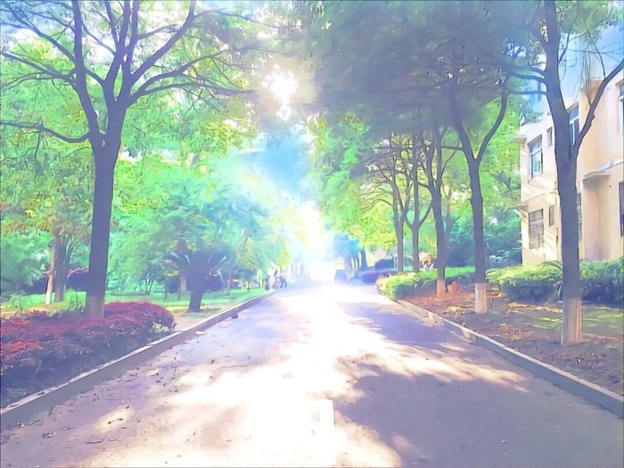 Tree Sunlight Outdoors Street Nature Day Sunbeam The Way Forward Beauty In Nature Road Tranquility No People Transportation Scenics Growth Branch Bare Tree