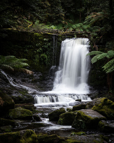 Waterfall Water Scenics Nature Motion No People Landscape Travel Destinations Beauty In Nature Beauty Outdoors EyeEm Selects Moody Nature Vacations Australia Beauty In Nature Forest Green Tasmanian Landscape Tree Day