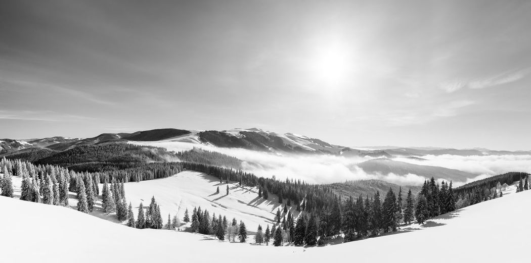 The beauty of winter on the snowy mountains in black and white. rodnei mountains - romania
