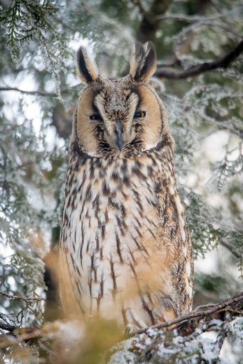 Close-up portrait of bird perching on tree