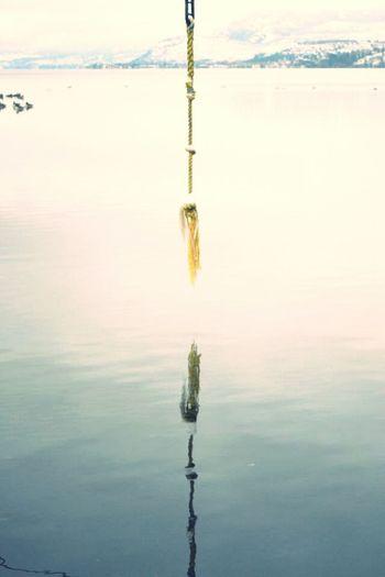Reflection Lakeshore Winter Lake Cold Days Canada Ducks Kelowna British Columbia