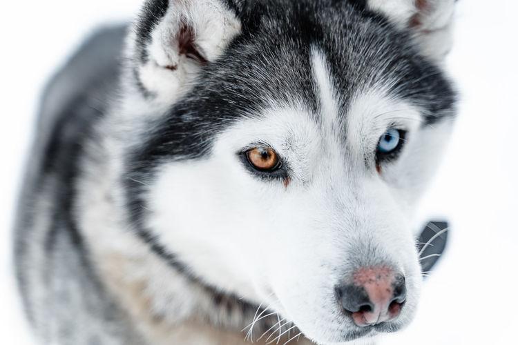 Close-up portrait of a white dog