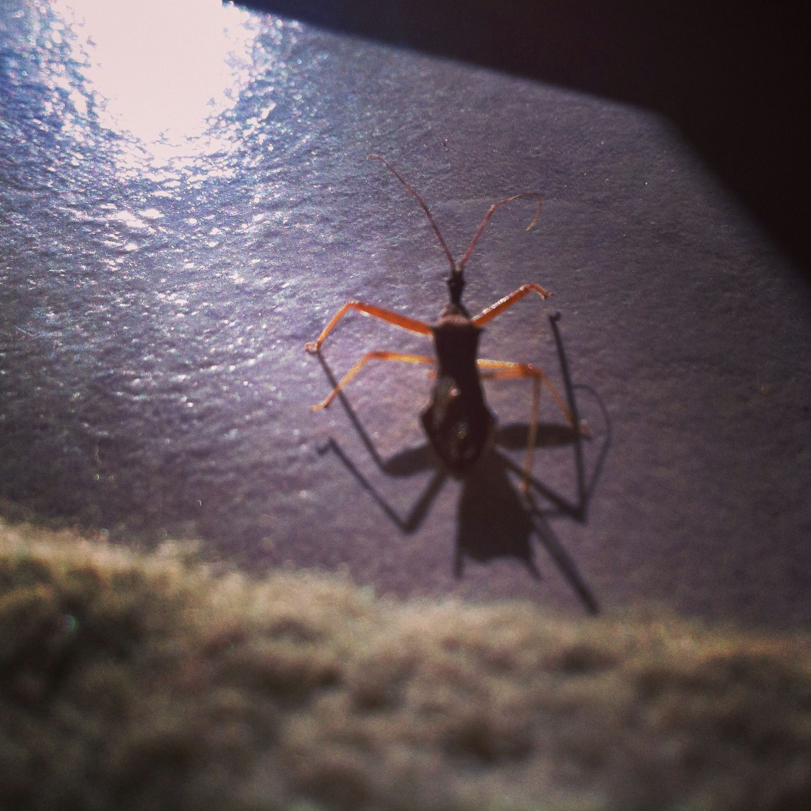 insect, one animal, animal themes, indoors, spider, animals in the wild, wildlife, close-up, spider web, selective focus, no people, full length, high angle view, wall - building feature, day, nature, window, focus on foreground, glass - material