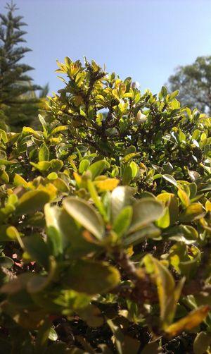 Tree Nature Noedit