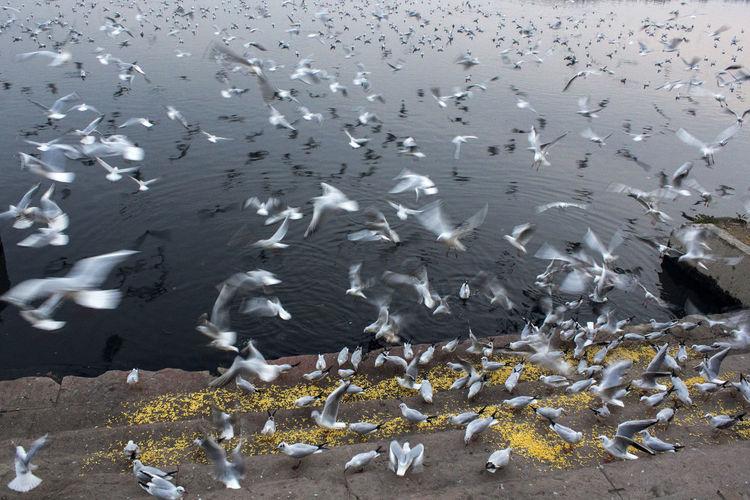 Flock of birds in sea