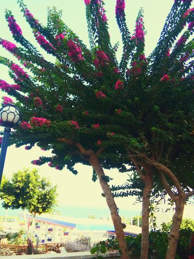 Tree Nature Growth Day Branch Outdoors No People Beauty In Nature Low Angle View Water Sky Freshness Mersin Yemiskumu Zakkum