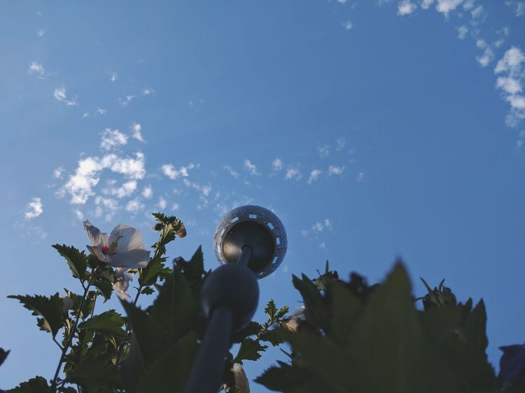 Blue Blue Sky Clouds And Sky Ground Level View Birds Food View Green Light Taken Today Flower White Taking Photos Check This Out Relaxing Hi! Color Palette Outdoors Sunlight White Flower Nature Taking Photos Outside Photography Outside Eyeemphoto