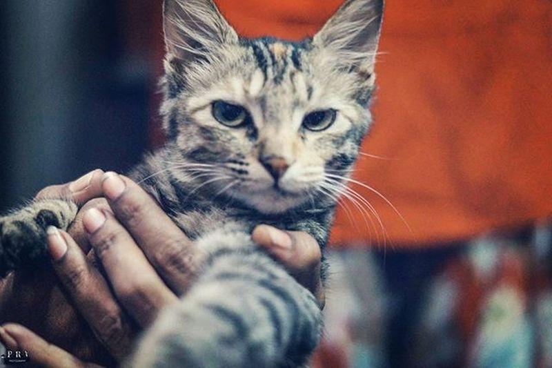 """Monday mornings be like"" Catsofinstagram Mondaymorning Prvphotography Buya Photooftheday Instadaily Instacat"