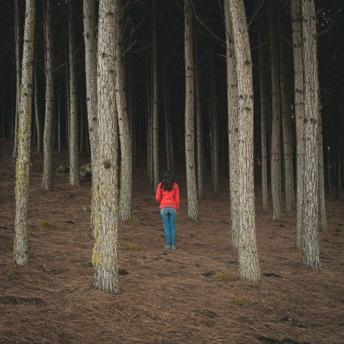 Alone Brazil Exploring Travel Casual Clothing Day Forest Full Length Girl Girls Land Leisure Activity Lifestyles Mood Nature Non-urban Scene One Person Outdoors Plant Real People Rear View Standing Tranquility Tree Wildlife WoodLand The Traveler - 2018 EyeEm Awards International Women's Day 2019