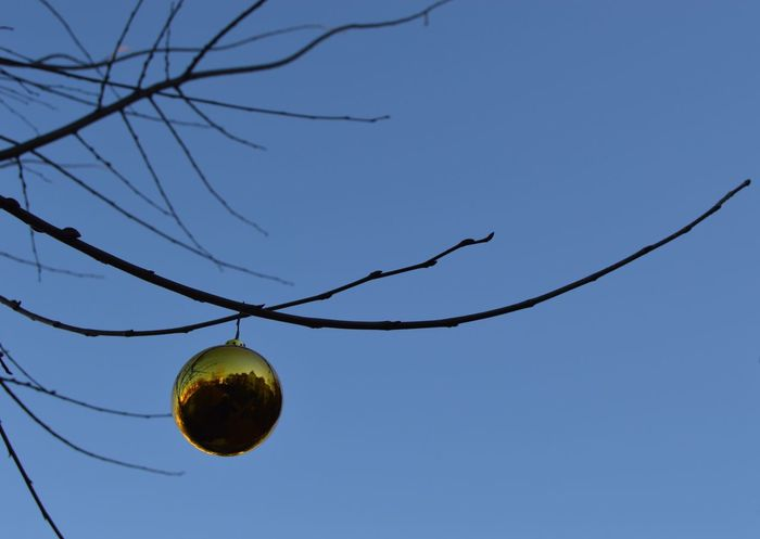 Christmas Ornament Ornament Low Angle View Tree Clear Sky Blue Branch Growth