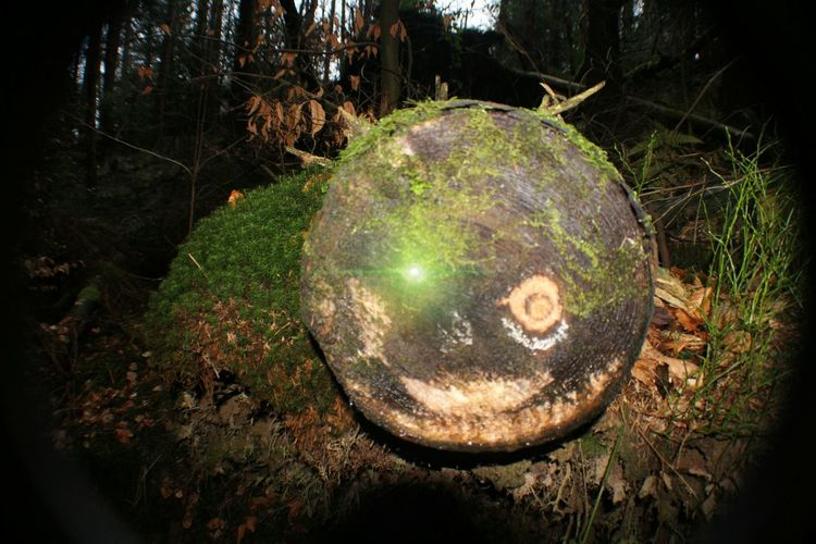 Night Tree No People Outdoors Nature Close-up Tree Stump Forest Beast Green Eye