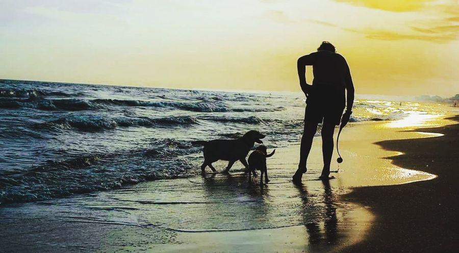 Silhouette Water Retriever Pets Full Length Sea Wave Beach Dog Sand Standing