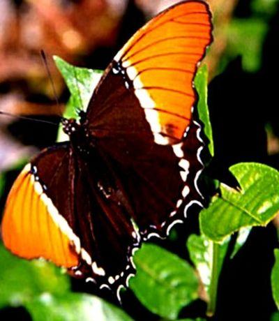 EyeEm Best Shots - Landscape Village Scape.Beautiful nature. Eyeem Nature Lover. Open Edit. Taking Photos. Beautiful Butterfly