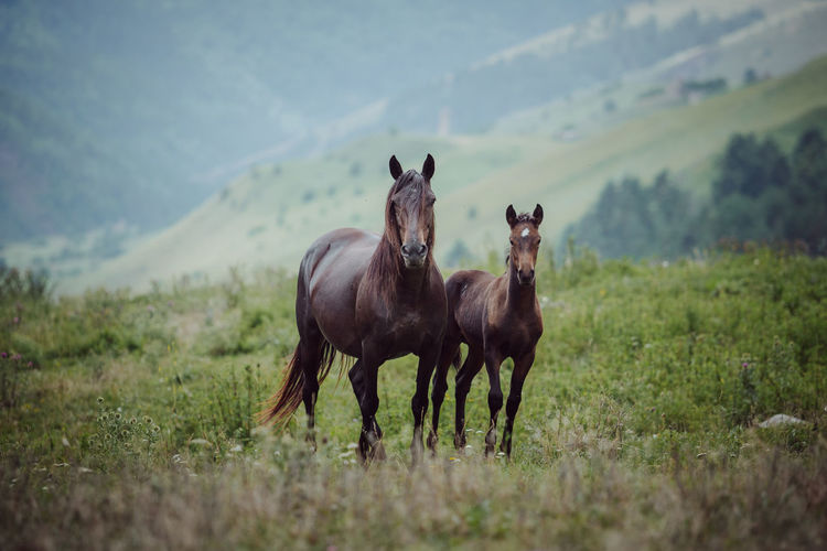 Horses on a field in the mountains