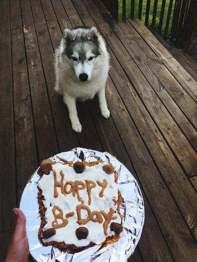 EyeEm Selects Dog Pets Dogbirthday