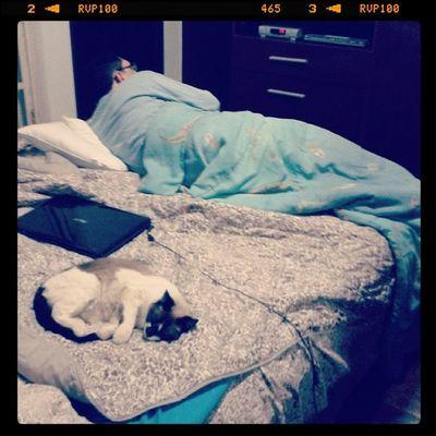 E vcs achando que eu tava brincando quando eu disse q ela roubou o lugar do meu pai.... tadinho HAUHAUHAUHA Dad Cat Funny Sleeping