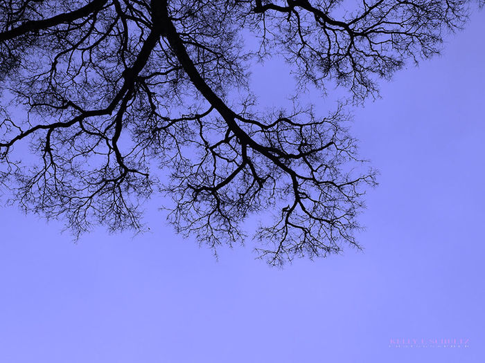Blue branches