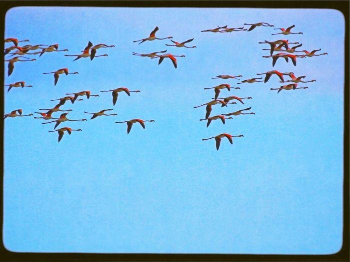 Sardinia EloediLo Tadaa Community Flying Flamingo Bastione Cagliari Urban City EyeEm Nature Lover Cagliari Casteddu