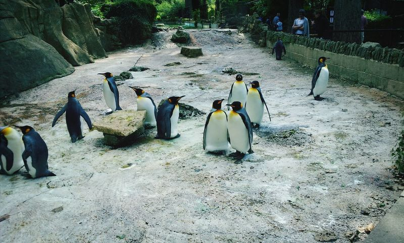 Penguin Animals Zoo No Escape