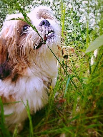 Posing pup