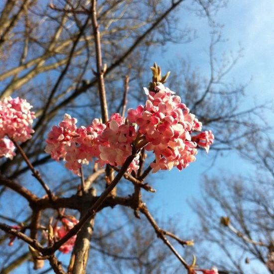 Spring Cc/yannis_ :)