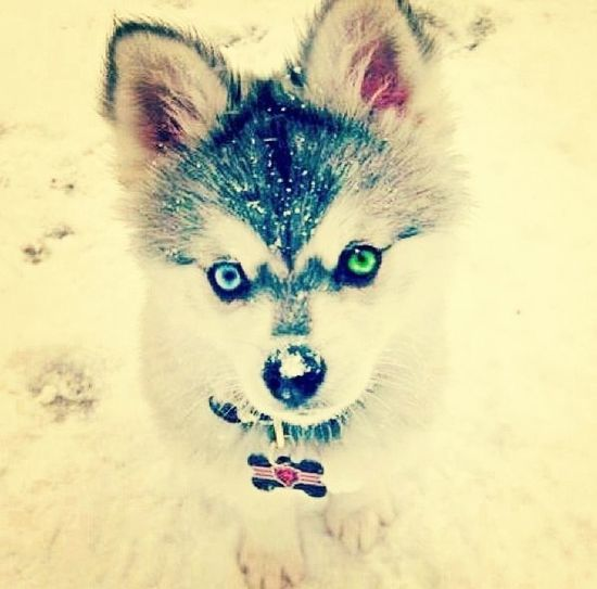 This Dog <3