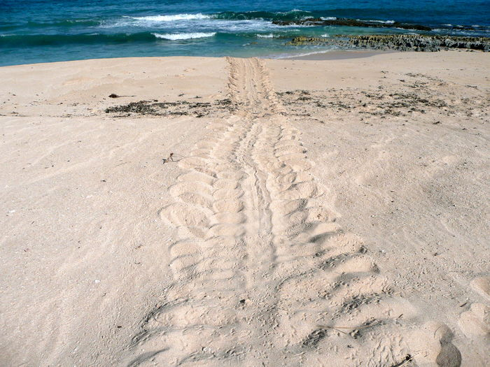 After Egg Laying Beach Beach Sand Tracks Beauty In Nature Enviormental Issues Enviormental Protection Nature No People Outdoors Sand Sea Sea Turtles Shore Turtle Breeding Turtle Eggs? Turtle Tracks In The Sand Turtles Water Wave