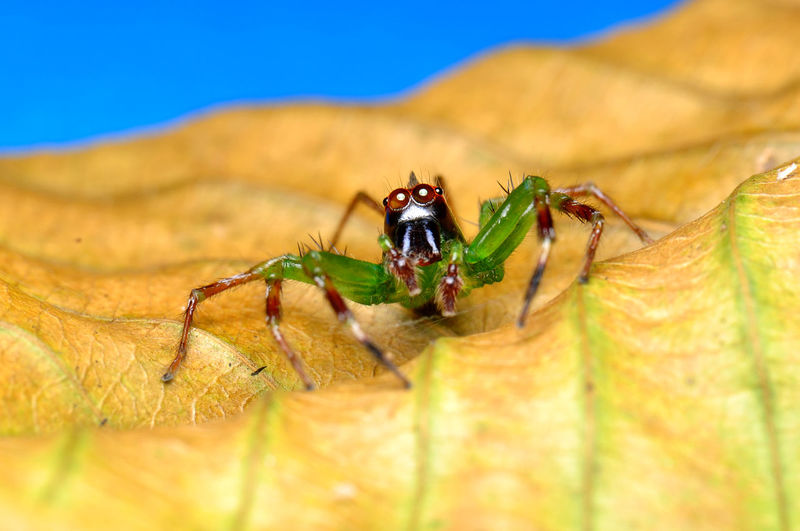 Spider Animal Animal Body Part Animal Eye Animal Leg Animal Themes Animal Wildlife Animals In The Wild Ant Close-up Day Insect Invertebrate Leaf Nature No People One Animal Outdoors Plant Plant Part Selective Focus