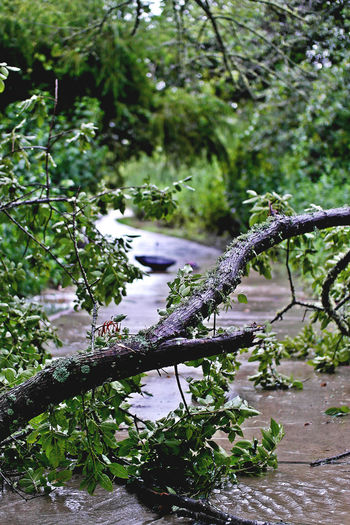 After Rain Beauty In Nature Branch Creek Fallen Tree Flooding Green Belt Green Color Nature Outdoors Trees Water Water Fall