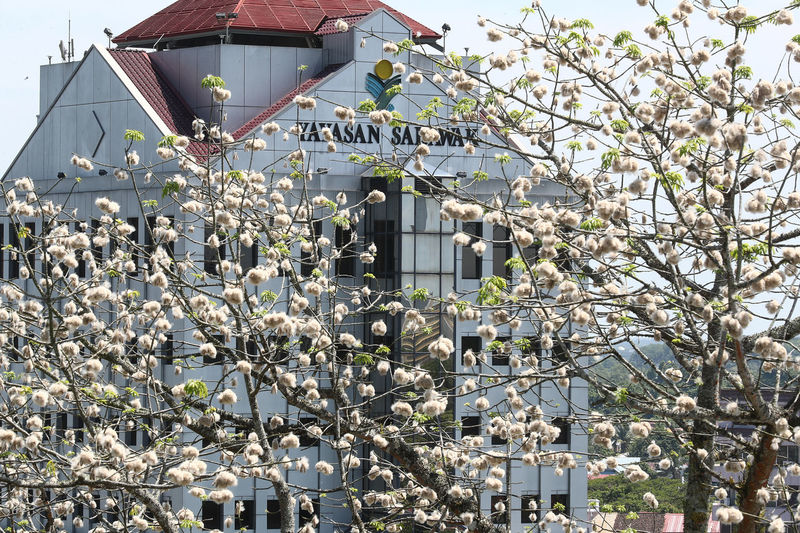 Cotton Tree Cotton Tree Plant Architecture Beauty In Nature Blossom Branch Building Exterior Built Structure Clear Sky Day Flower Fragility Freshness Growth House Kucing Low Angle View Mosque Nature No People Outdoors Sarawak Sky Springtime Tree