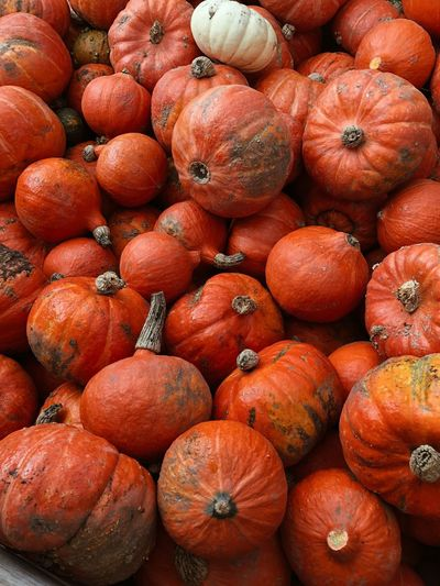 Pumpkin Food Food And Drink Healthy Eating Wellbeing Fruit Freshness Large Group Of Objects Backgrounds Abundance Orange Color Market For Sale High Angle View Still Life Market Stall Full Frame Vegetable No People Organic Day Autumn Mood