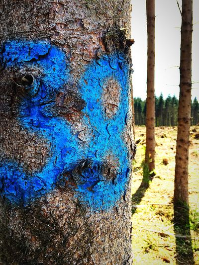 Check This Out Non-urban Scene Tree Marked Marked For Life Blue Number Sentence Selective Focus Non Urban Scene Forest Human Meets Technology