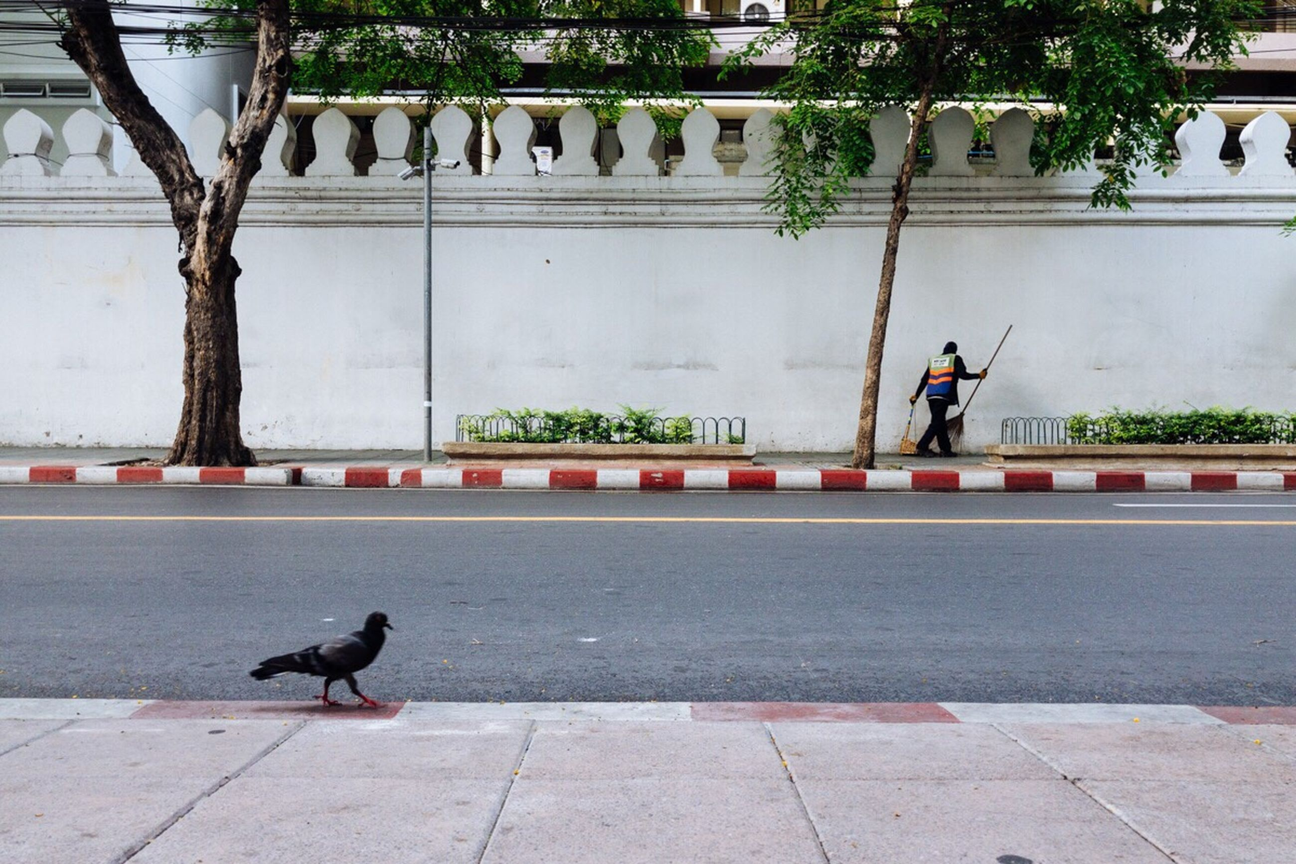 vertebrate, bird, one animal, city, day, full length, plant, footpath, architecture, road, street, real people, animals in the wild, animal wildlife, built structure, nature, pets, people, outdoors