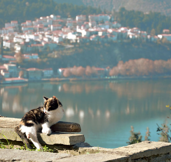 Dog relaxing in a lake