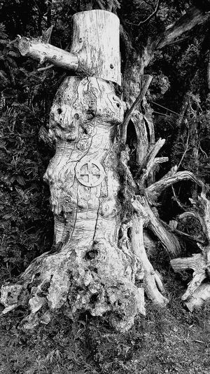 B&w Photography B&W Collection B&w Photo Blackandwhite Photography Black And White Sculpted Tree Trunk Tree Trunk Detail Wooden Structure Shadow Sunlight No People Nature Wood - Material Touristic Attraction Druid's Secret Place Auray Morbihan (56) Bretagne France France🇫🇷 Huawei P9 Photos HuaweiP9Photography Wooden Structure