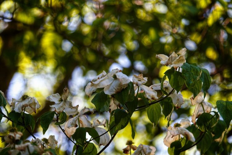 Close-up of white flowering plant leaves on tree
