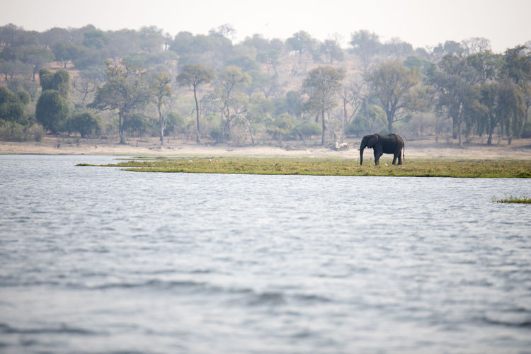 View of elephant in the lake