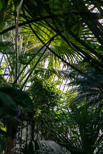 View of palm trees through plants