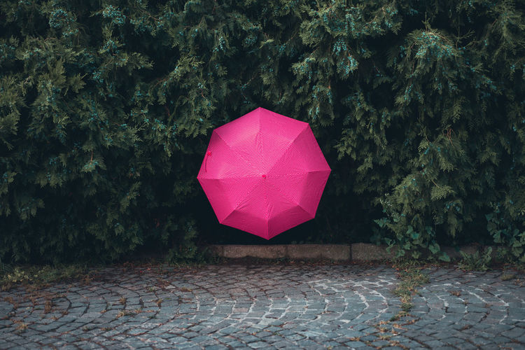 Pink umbrella amidst trees