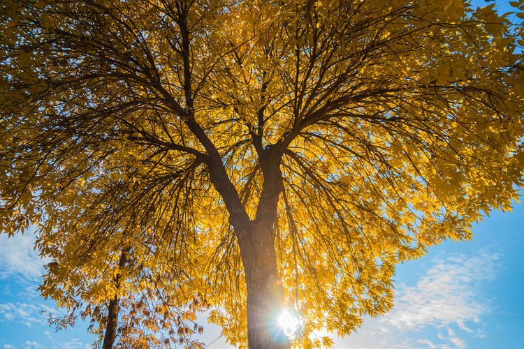 Tree Branch Autumn Sky Leaf No People Outdoors Close-up Low Angle View Beauty In Nature Tranquility Tree Trunk Scenics Day Growth Nature Autumn Colors Orange Color Leaves Light Autumn Leaves Sunlight Cloud - Sky Blue Nature