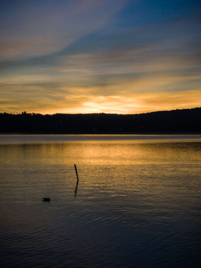 tranquility, a duck and a post Animal Beauty In Nature Blue Blue Sky Clarity Darkness And Light Duck Lake Nature Orange Outdoors Scenics Shadow Silhouette Sky Sunrise Teal Teal And Orange Tranquil Scene Tranquility Water