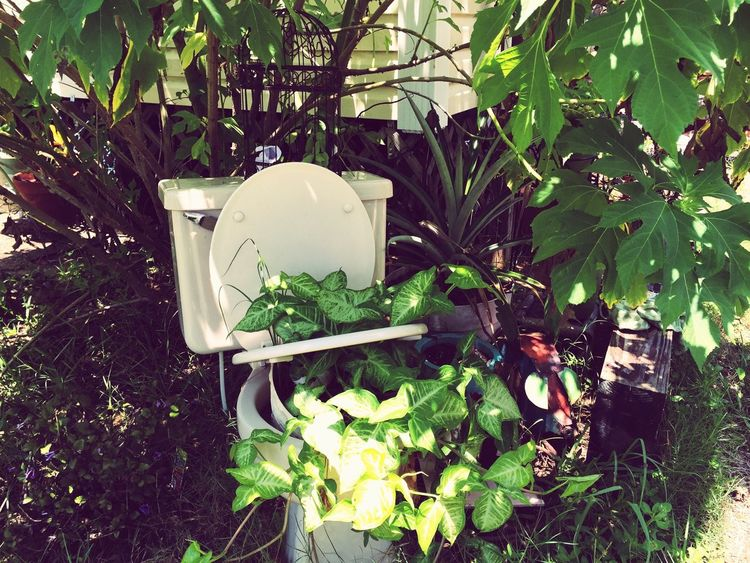 Doghairstudio Aura-cleansing Getting Grounded Enjoying Life Gypsy Girl Brevardsbest Repurposed Toilet Creative Gardening