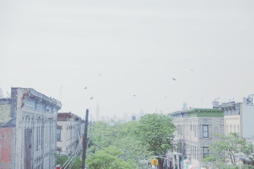 Williamsburg Hipster Hippie Bushwick Brooklyn Rooftop Pigeons Landscape New York