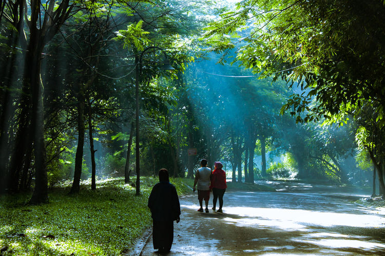 car free day Tree Water Full Length Togetherness Forest Child Men Tree Area Walking Sky Bamboo Grove Rainforest Lush - Description Tropical Rainforest