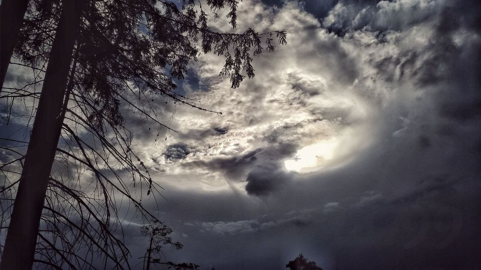 cloudy...impressive sky... Tree Bird Flying Sky Cloud - Sky Storm Cloud Cumulonimbus Dramatic Sky Atmospheric Mood Cloudscape Moody Sky Meteorology Storm Tornado Sky Only Thunderstorm Hurricane - Storm Torrential Rain Overcast Cyclone